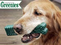 12oz Greenies Dental Chews on sale @Coupaw