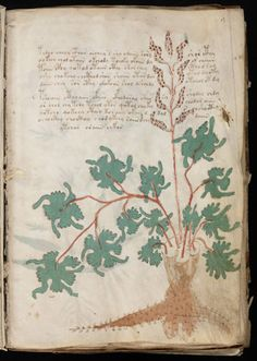 CSI | The Voynich Manuscript: The Book Nobody Can Read