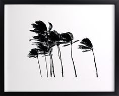 Click to see 'Palm Trees in the Wind' on Minted.com
