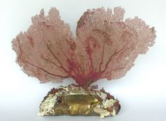 18th century gold leaf Italian architectual fragment decorated with fossil shells and carnelian shells and coordinating sea fan.