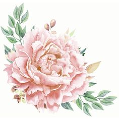 Pretty Coral Pink Rose Meadow Art Print (€11) ❤ liked on Polyvore featuring home, home decor, wall art, backgrounds, fillers, flowers, draw, plants, flower stem and rose wall art