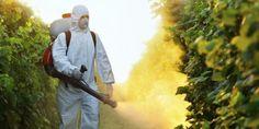 Avaaz - Protejam nossa saúde, parem a Monsanto