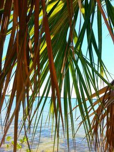 "Love ""Matlacha Island"""