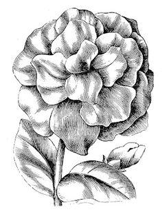Vintage Floral Clip Art – Petunias | The Graphics Fairy