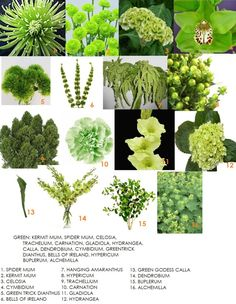 green flower guide