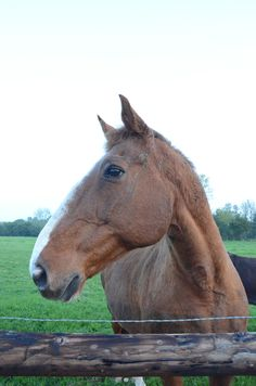 """The """"watch horse"""""""