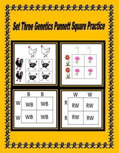 Genetic Punnett Square Practice Dominance,Incomplete ...