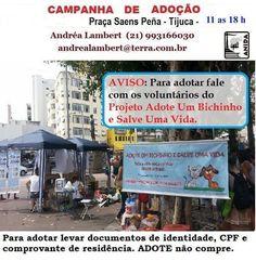 BONDE DA BARDOT: RJ: Campanha de adoção de cães e gatos na Praça Saens Peña, na Tijuca, nesta sexta (02/10)