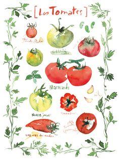 Tomato kitchen poster, 8X10 Food art print, Botanical illustration, watercolor vegetable kitchen wall decor, red