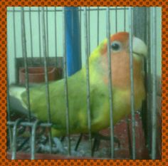 pet bird polly +