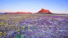 Super Bloom 2005, Atacama Desert, aka Death Valley
