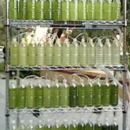 An Algae Bioreactor from Recycled Water Bottles - yeah, this would come in handy...