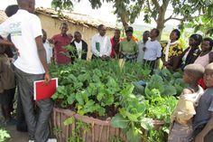 We are helping HIV/AIDS affected communities become self-sufficient through projects like this community garden Agricultural Development, Hiv Aids, Barrel, Self, Africa, Community, Projects, Log Projects, Blue Prints