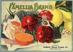 Carpinteria Pie Lemon Citrus Fruit Crate Label Art Print 161080651505