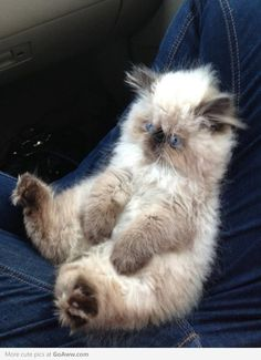 Fluffy!  He is soooo FLUFFY!!