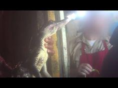 Ask Hermès to Stop Selling Crocodile and Alligator Skins | Take Action | PETA.org.uk - 1