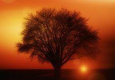 Photo gratuite: Sunset, Ciel Du Soir, Rémanence - Image gratuite sur Pixabay - 229335