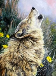A painting of a gray wolf howling.To provide with the best quality reproduction this painting was photographed by a professional photographer. He creates reproduction-quality digital files by direct capture, using a state-of-the-art Hasselblad camera. Timberwolf, Wolf Painting, Wolf Pictures, Art Japonais, Call Art, Wolf Howling, Arte Pop, Wildlife Art, Australian Shepherd
