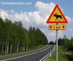 Ein Elch überquert ein Straßenschild in Rovaniemi in Lappland in Finnland.
