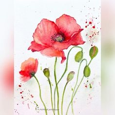 "Parika on Instagram: ""Watercolor Poppies .. 🥰 for Day 7 & 8 of #watercolorfloraladdiction hosted by me and my friends @artletsbyadii and @mooninkarts Sorry,…"""