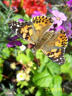 Belvoir Wildlife With Wings: Chloe Wright's photo