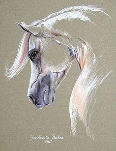 White arabian horse by Paulina Stasikowska
