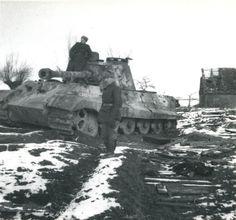 Tiger im Focus - Unidentified Tiger II