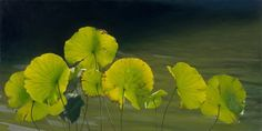 Tatyanna Klevenskiy Artwork - Lilypads 24 x 48 Realistic Paintings, Fine Art Gallery, Contemporary Paintings, Custom Framing, Oil On Canvas, Plant Leaves, Abstract, Artwork, Flowers