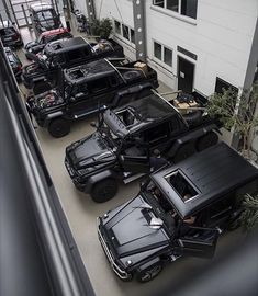 AMG stable