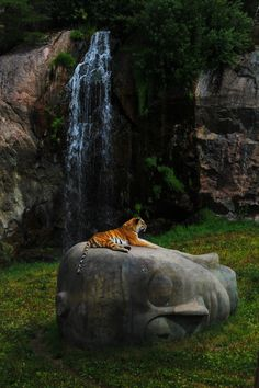 The Buddah Of Tigers