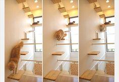 Prateleiras fazem a cabeça dos gatos. Colocadas desta maneira deixam os bichanos felizes, pois podem subir e ver o que acontece na casa lá de cima