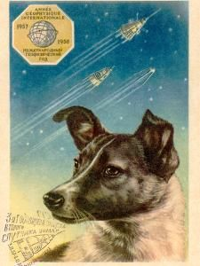 Laika the Space Dog Postcard by Detlev Van Ravenswaay Laika Dog, Vostok 1, Dog Suit, Space Race, Ways Of Seeing, Art Boards, Science Curriculum, Astronauts, Soviet Union