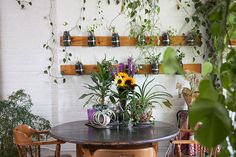 Summer Rayne Oakes uses 500 lush plants to turn her Brooklyn apartment into indoor Jungle Green Apartment, Brooklyn Apartment, Moroccan Floor Pillows, Moroccan Decor, Apartamento No Brooklyn, Feng Shui, Apartment Herb Gardens, Mason Jar Garden, Pineapple Planting