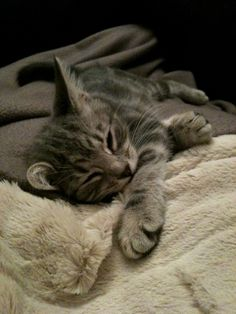 Silver tabby kitten - Ash at 9 weeks - photo: Paper & Ash