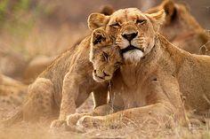 Wild love #wild #animals