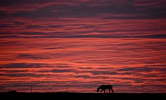 A horse is silhouetted against the morning sky on a meadow in Luehnde near Hannover, northern Germany.
