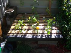 Cute Little Pallet Garden #garden #palletplanter #recyclingwoodpallets I sanded the pallet, stapled landscape fabric to back and sides, filled with 1/3 peat moss, 1/3 vermiculite, and 1/3 compost. Planted peppers, herbs, ...