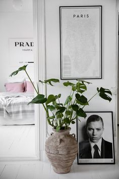 Poster and plant