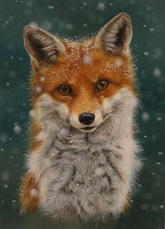 Winter fox - maybe painted as a wooden sign or ornament, . - Winter fox – maybe painted as a wooden sign or ornament, - Nature Animals, Animals And Pets, Autumn Animals, Fox Pictures, Fox Art, Cute Fox, Woodland Creatures, Red Fox, Cute Baby Animals