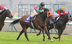 Aerovelocity (NZ) 2008 B.g. (Pins (AUS)-Exodus (NZ) by Kaapstad (NZ) 1st Takamatsunomiya Kinen (JPN-G1,1200mT,Chukyo) (photo: HKJC)