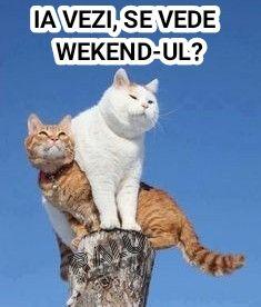 Animals And Pets, Funny Animals, Babe, Funny Cats, Jokes, Humor, Comics, Roxy, Friday