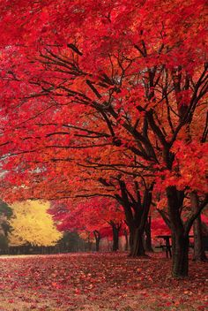 Red Fall (by Tony Lee)