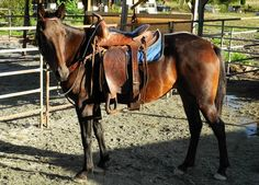 October Horse of the Month - J & M Acres Horse Rescue
