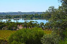 Banrock Station, Murray River View over Vineyard