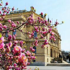Cateva obiective pe care sa nu le ratezi in Praga - Ioana Vesa Magnolia, Magnolias