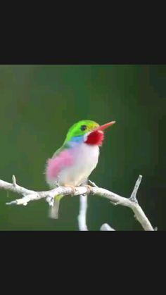 Funny Birds, Cute Birds, Pretty Birds, Animals Amazing, Animals Beautiful, Cute Animals, Exotic Birds, Colorful Birds, Bird Poems