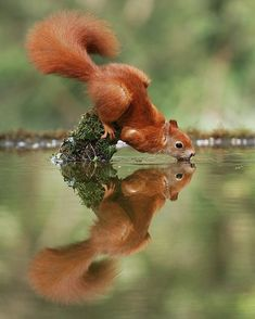 Squirrel The Effective Pictures We Offer You About Cute animals wallpaper iphone A quality picture can tell you many … Wildlife Nature, Nature Animals, Animals And Pets, Wild Animals Photography, Wildlife Photography, Photography Photos, Cute Baby Animals, Funny Animals, Cute Squirrel