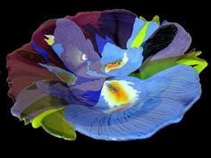 An Iris abstraction- slumped, kiln-formed glass bowl by Cynthia Morgan