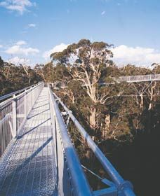Tree top walkway, Denmark, Australia In the great valley of the giant Karri trees