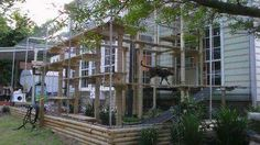 . Crazy Cat Lady, Crazy Cats, Cat Enclosure, Cat Room, Cat Trees, Plants, Animals, Outdoor, Image